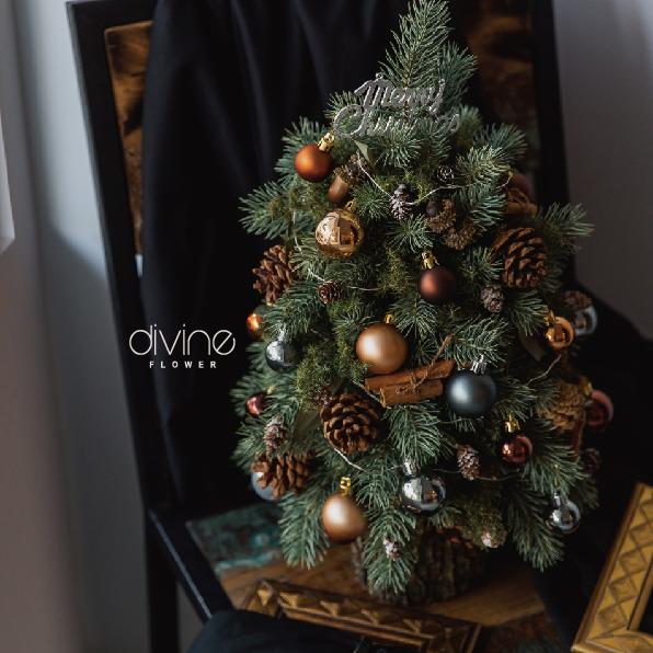 諾貝松聖誕樹 1