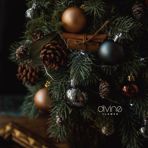 諾貝松聖誕樹 2