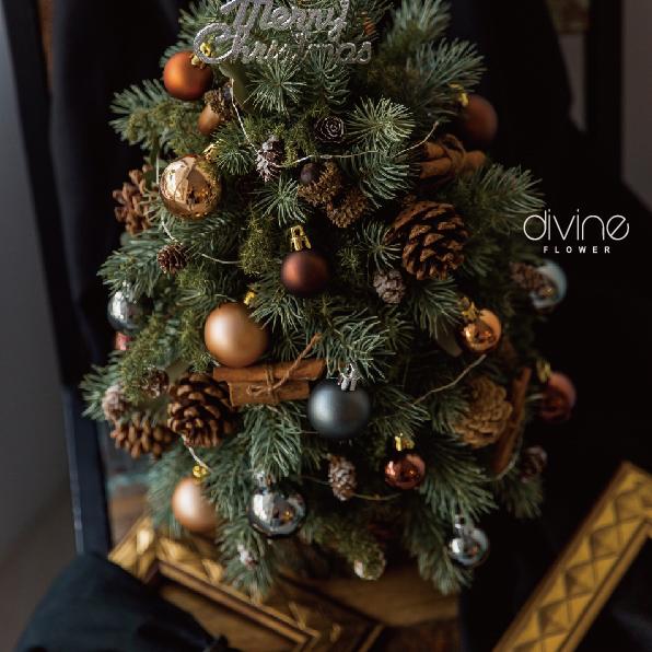 諾貝松聖誕樹 3