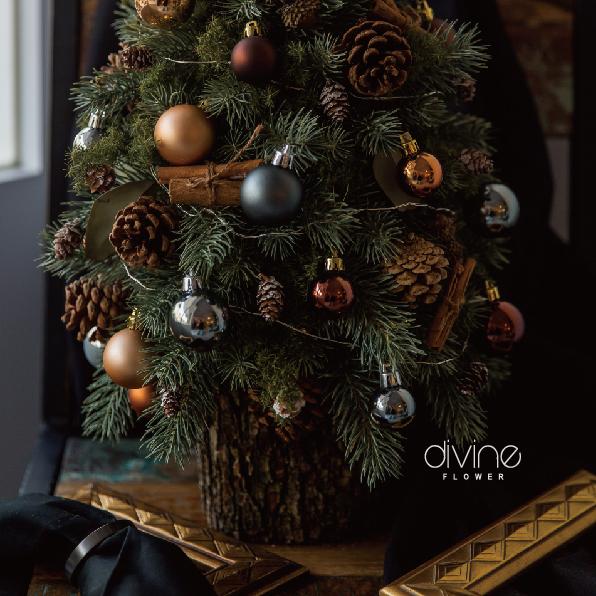 諾貝松聖誕樹 4